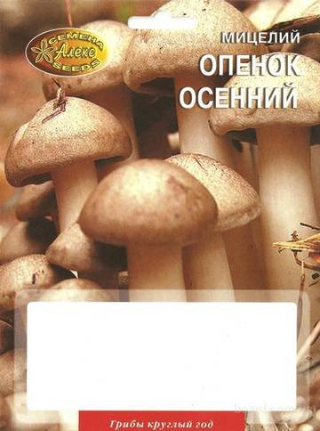 http://s2.uploads.ru/t/WqjRI.jpg