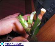 http://s2.uploads.ru/t/Yj9eX.jpg