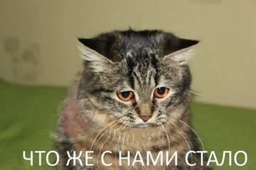 http://s2.uploads.ru/t/Z9TOb.jpg