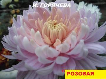 http://s2.uploads.ru/t/aCTA2.jpg