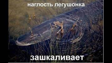http://s2.uploads.ru/t/bWVE3.jpg