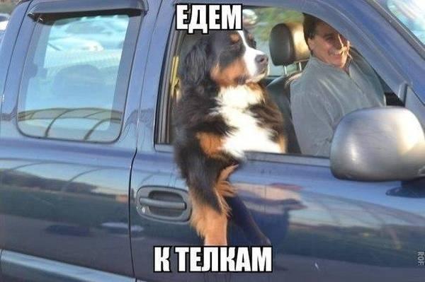 http://s2.uploads.ru/t/cMJmU.jpg