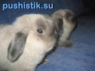 http://s2.uploads.ru/t/ca9LW.jpg