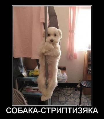 http://s2.uploads.ru/t/d40lv.jpg