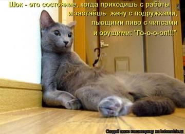 http://s2.uploads.ru/t/eF7Mb.jpg