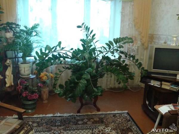 http://s2.uploads.ru/t/ePY9x.jpg