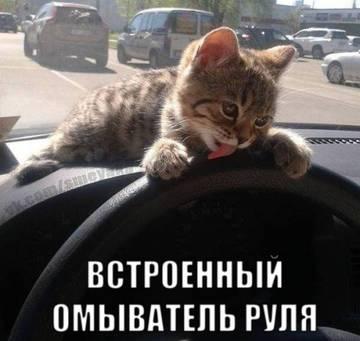 http://s2.uploads.ru/t/efL1n.jpg