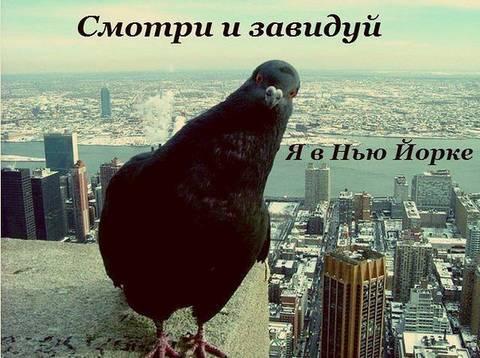 http://s2.uploads.ru/t/ftTvy.jpg
