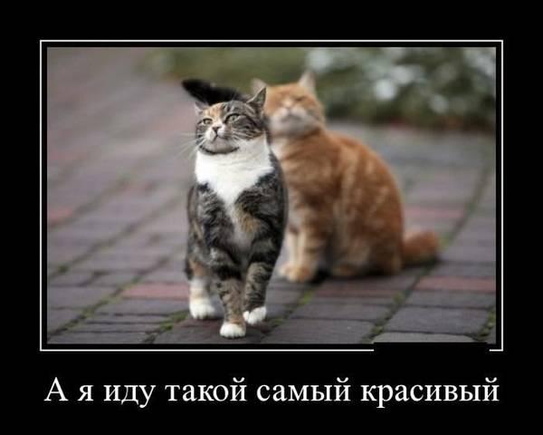 http://s2.uploads.ru/t/g4hU9.jpg