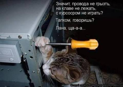 http://s2.uploads.ru/t/gMGvn.jpg