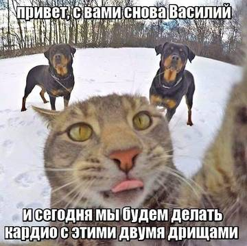 http://s2.uploads.ru/t/gq4Q3.jpg