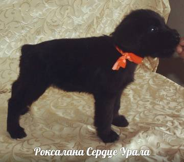 http://s2.uploads.ru/t/grJq9.jpg