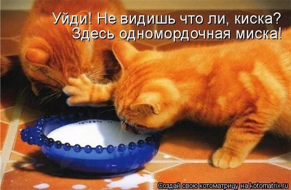 http://s2.uploads.ru/t/gzs7a.jpg