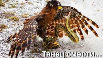 http://s2.uploads.ru/t/hSf8X.jpg
