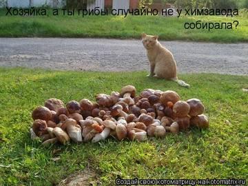 http://s2.uploads.ru/t/iRyh2.jpg