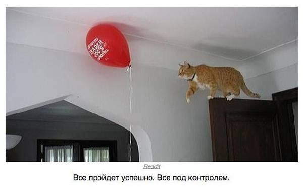 http://s2.uploads.ru/t/jcQB6.jpg