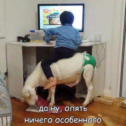 http://s2.uploads.ru/t/m9FRA.jpg