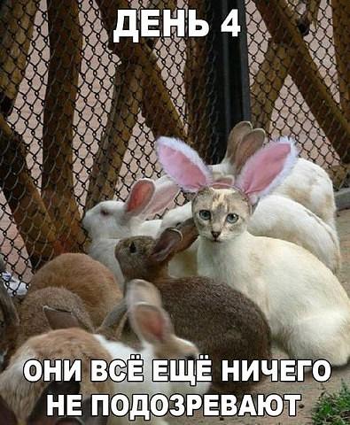 http://s2.uploads.ru/t/n0idB.jpg