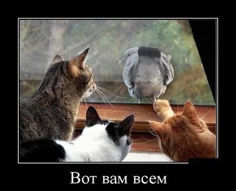 http://s2.uploads.ru/t/nm8r4.jpg