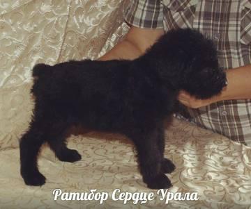 http://s2.uploads.ru/t/o0rZu.jpg