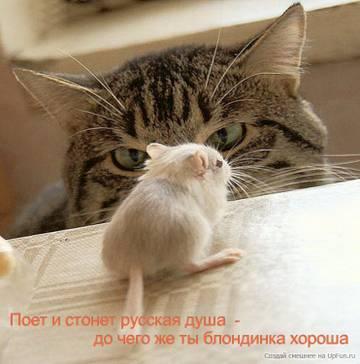 http://s2.uploads.ru/t/oNGFW.jpg