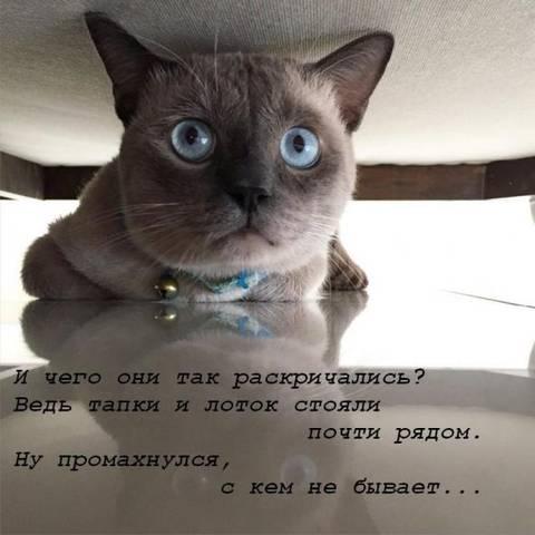 http://s2.uploads.ru/t/pPbru.jpg