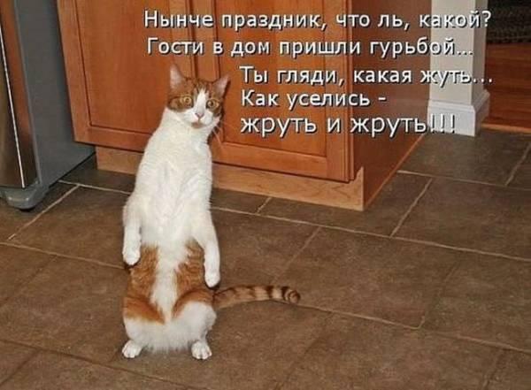 http://s2.uploads.ru/t/q7Sdt.jpg