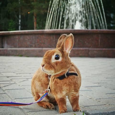 http://s2.uploads.ru/t/rYXey.jpg
