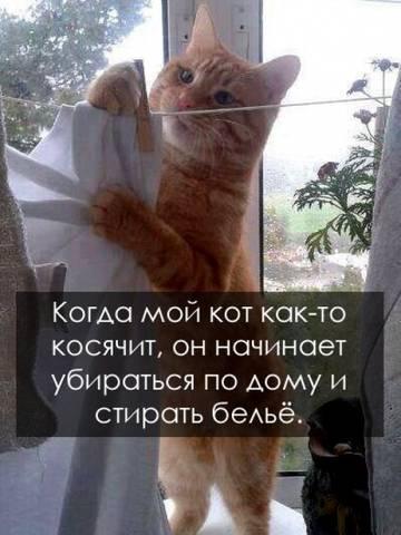 http://s2.uploads.ru/t/sHnDG.jpg