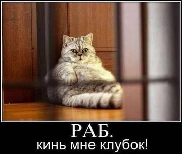http://s2.uploads.ru/t/tkWoa.jpg