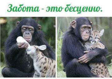 http://s2.uploads.ru/t/tquy6.jpg