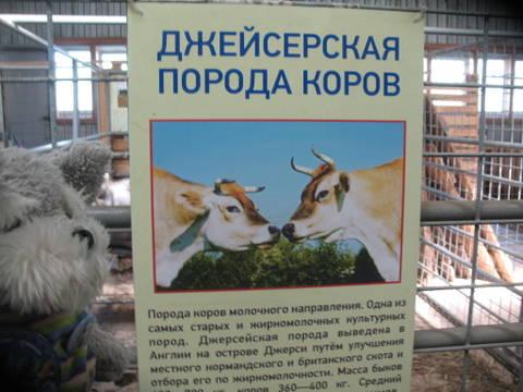 http://s2.uploads.ru/t/uKo0P.jpg
