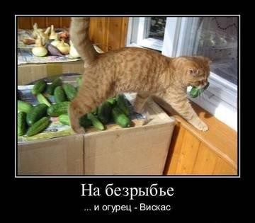 http://s2.uploads.ru/t/woDaF.jpg