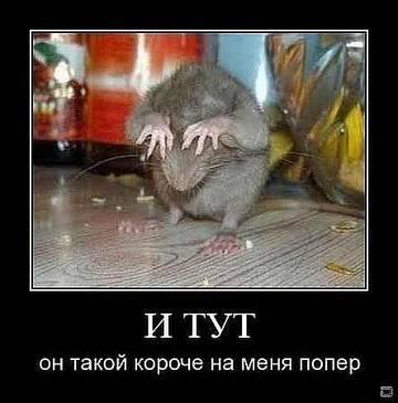 http://s2.uploads.ru/t/wsTqd.jpg