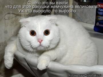 http://s2.uploads.ru/t/xs56Z.jpg
