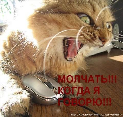 http://s2.uploads.ru/t/yeEga.jpg