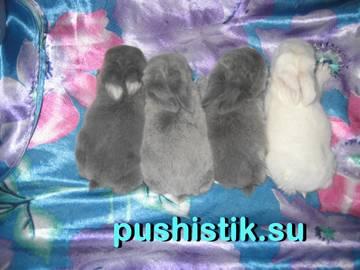http://s2.uploads.ru/t/zI7kX.jpg