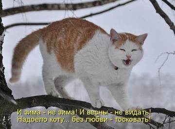http://s2.uploads.ru/t/zXmZP.jpg