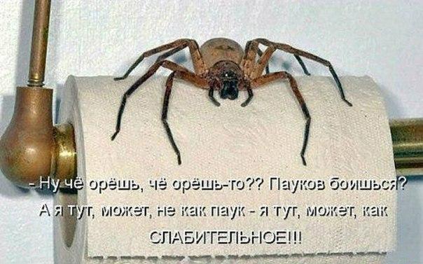 http://s2.uploads.ru/tb6hr.jpg