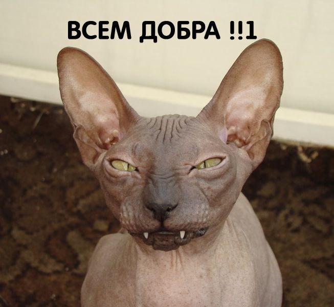 http://s2.uploads.ru/ulJIv.jpg