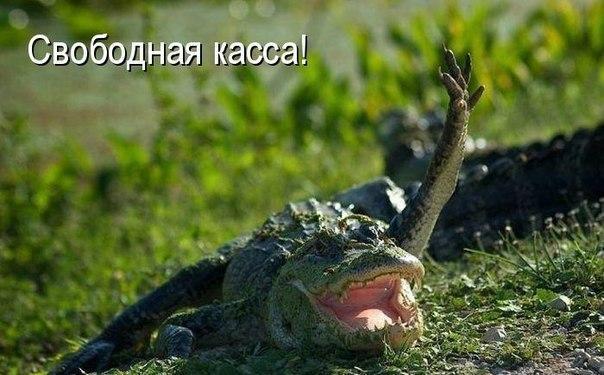 http://s2.uploads.ru/vVkbK.jpg