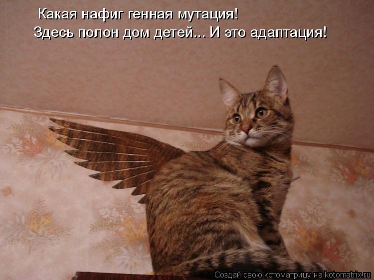 http://s2.uploads.ru/vbBaX.jpg