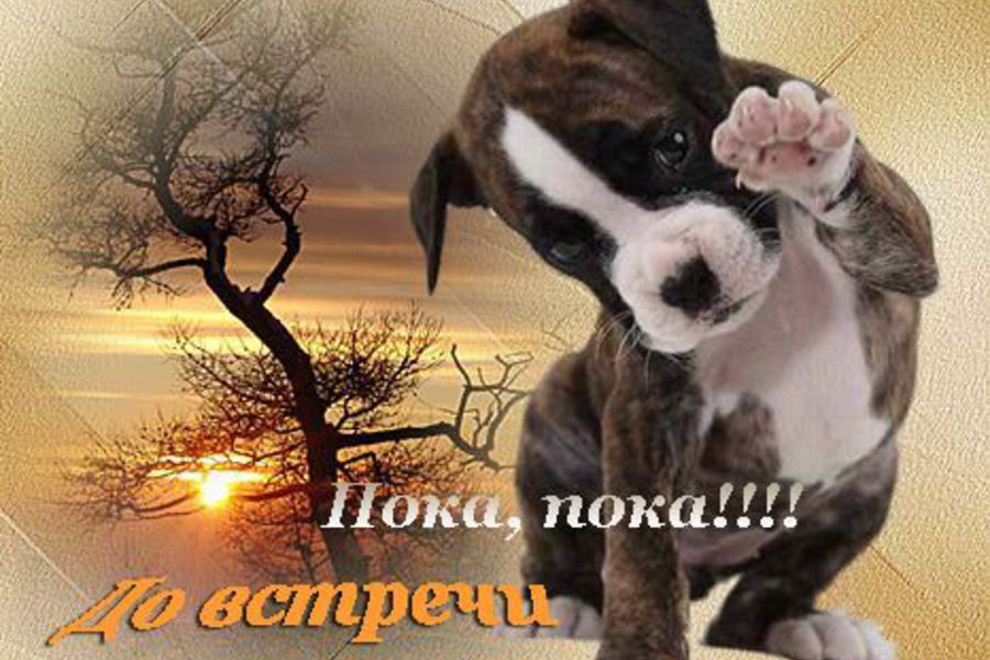 http://s2.uploads.ru/wIYK1.jpg