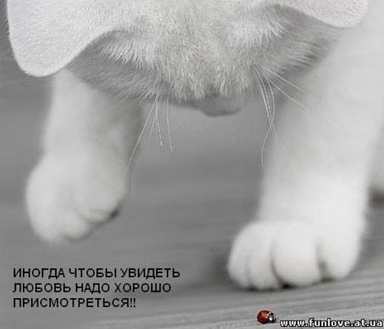 http://s2.uploads.ru/1Ys5T.jpg
