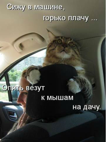 http://s2.uploads.ru/4WxCh.jpg