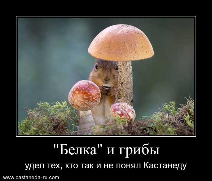 http://s2.uploads.ru/BWM4K.jpg