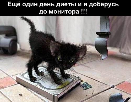 http://s2.uploads.ru/Elg3R.jpg
