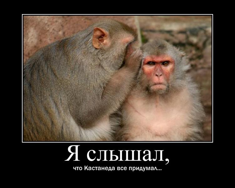 http://s2.uploads.ru/PiYWC.jpg