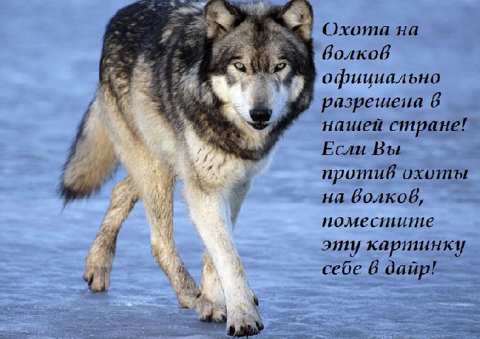 http://s2.uploads.ru/UJ8Xb.jpg