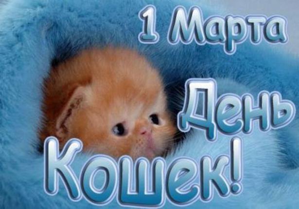 http://s2.uploads.ru/W3cMF.jpg